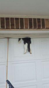 cat rolled up in garage door